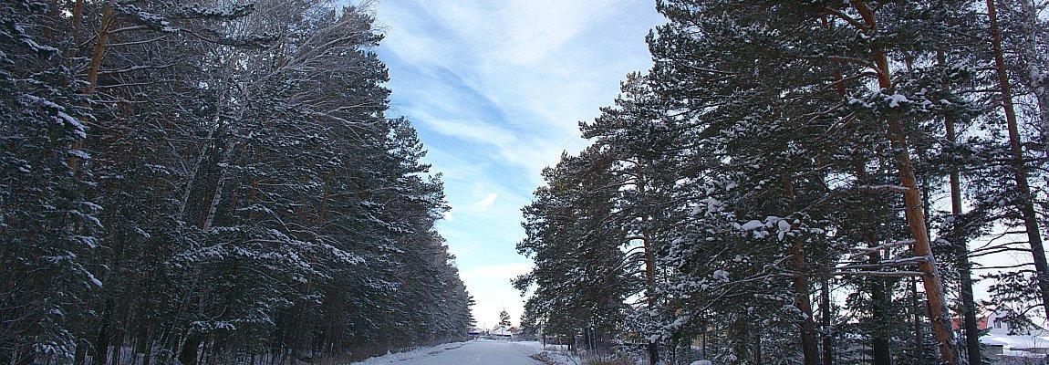 Зимний лес, зимняя дорога, Олег Чувакин, рассказ Встреча