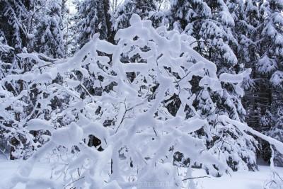 Лес, снег, зима, красивые фотографии, 2016