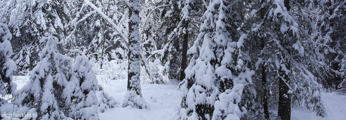 Новогодний лес, снег, ёлки, фото, фантазия, Новый год