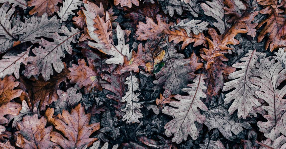 Осенние листья, фото, винтаж, прости меня, Даша