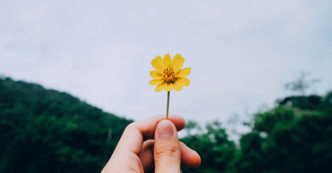 Цветок в руке, рука с цветком, фото