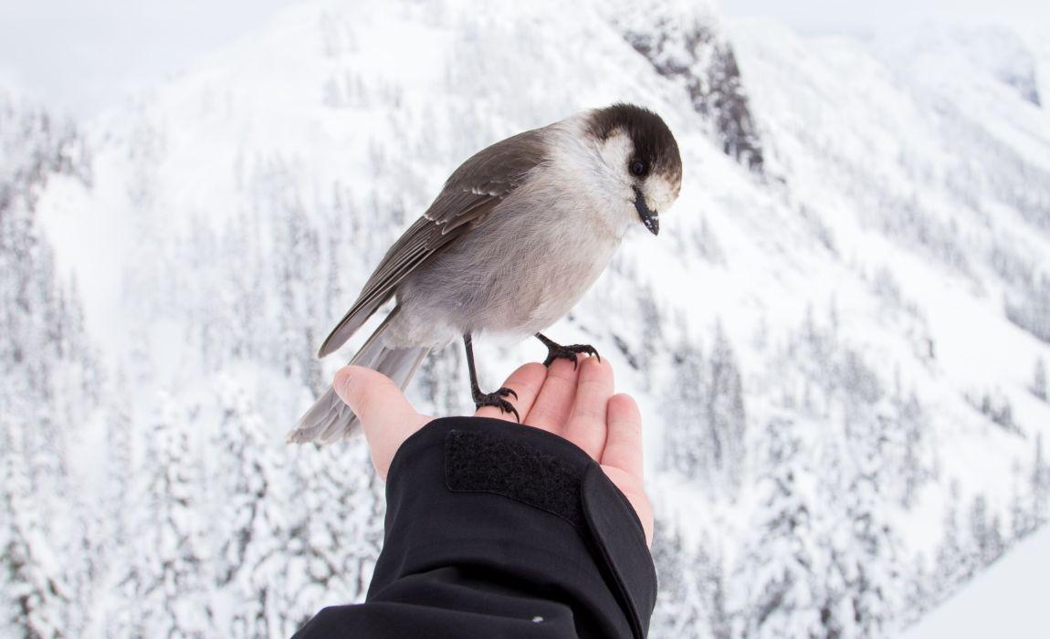 Птичка на руке, добро, зима, счастье, Новый год, чудо, короткие рассказы, хороший конец