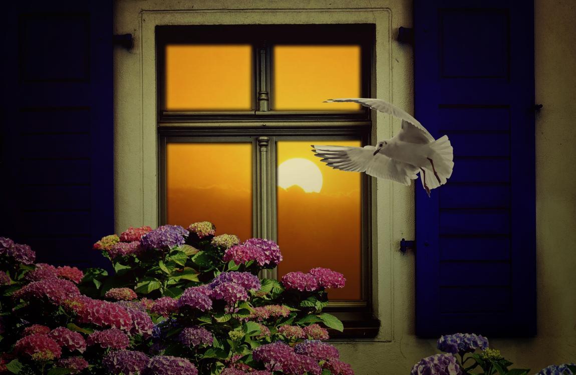 Закат, окно, лучи, заходящее солнце