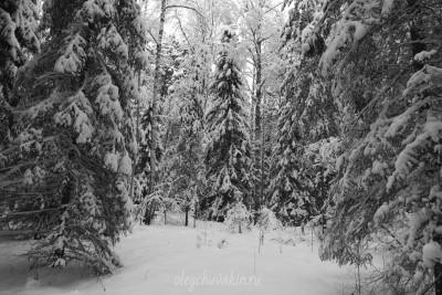 Январский лес, Сибирь, фото, 2016