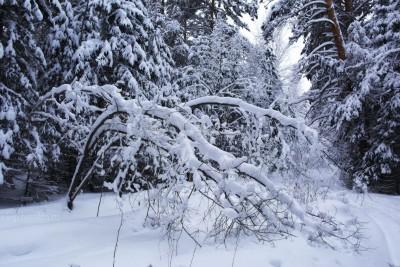 Лес и снег, красота леса, фото, 2016