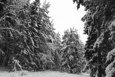 Зима, январь, лес, снег, фото, 2016
