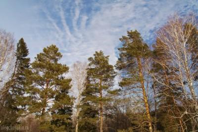 Деревья, сосны. берёзы. ели, небо, март, весна, фото