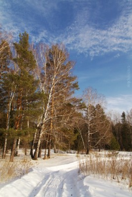 Деревья, небо, март, дорога. снег, фото