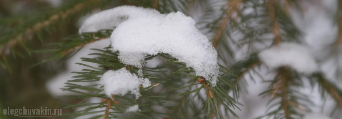 Снег, ёлки, ветки, фото, Джон Рёскин, радость навеки, рыночная цена