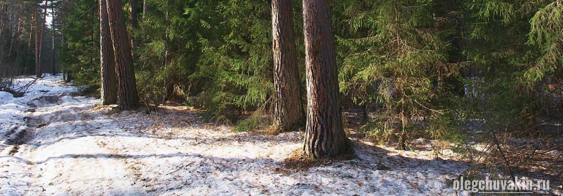 Апрель, лес, снег, фото, Олег Чувакин, Человек с ротвейлером