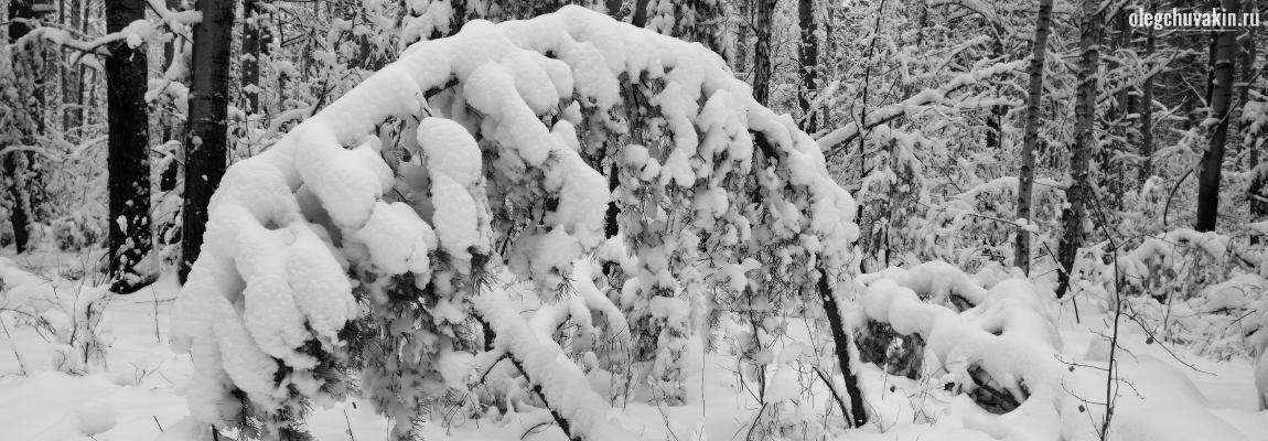 Зима, сугробы, снег, лес, фото, холодно корректору