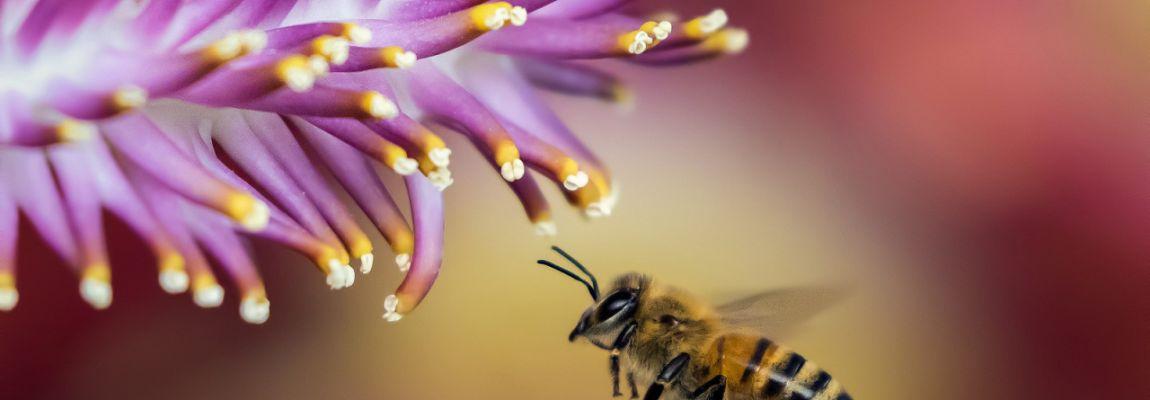 Жизнь, пчела, цветок, радость, солнце, иллюстрация к тесту