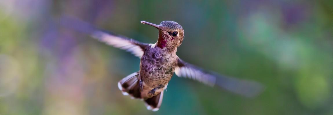 Птичка, крылья, полёт, фото, иллюстрация к тесту