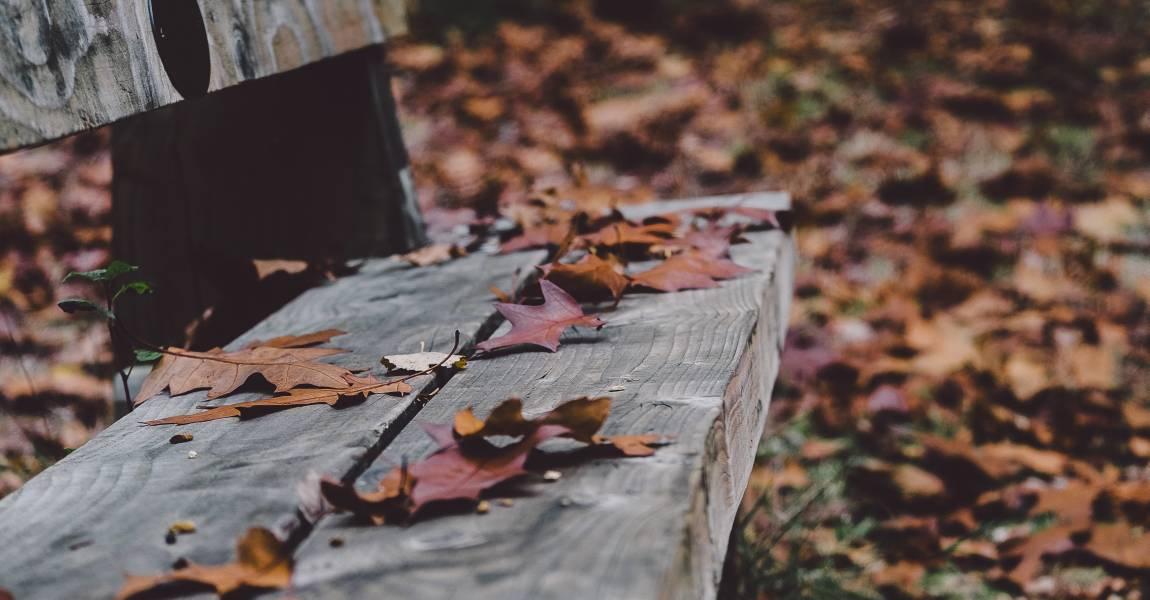 Осень, листья, фото