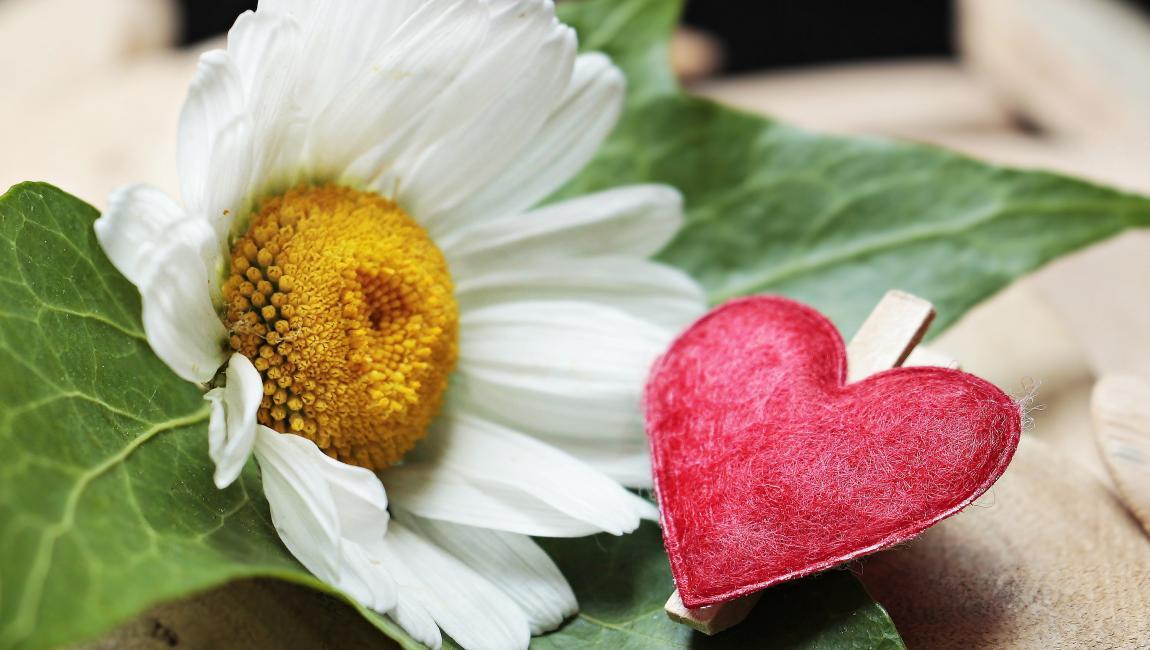 Ромашка, сердечко, сердце, любовь, рассказ