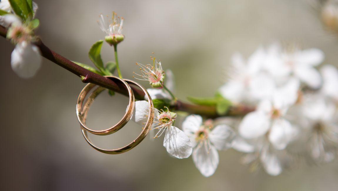 Свадьба, кольца, на ветке дерева, весна, новобрачные