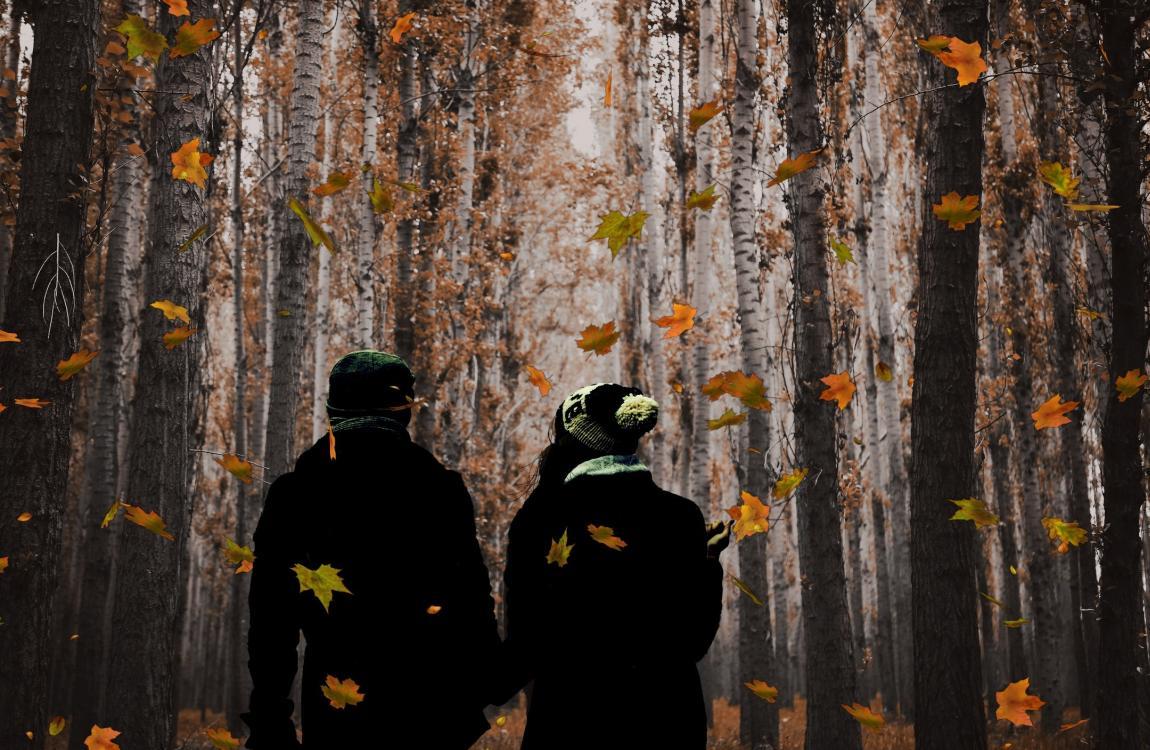 Двое, лес, осень, пара, он и она, любовь