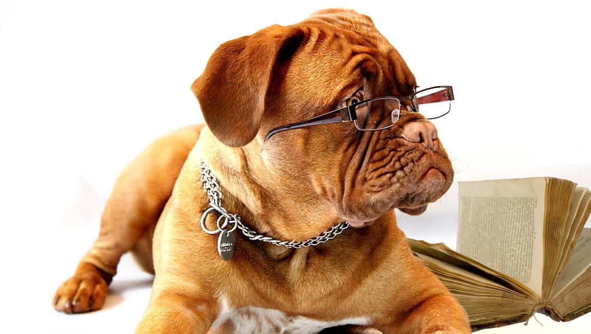 Дог, собака, очки, пёс в очках, с книгой, литература, конкурс, грамотность