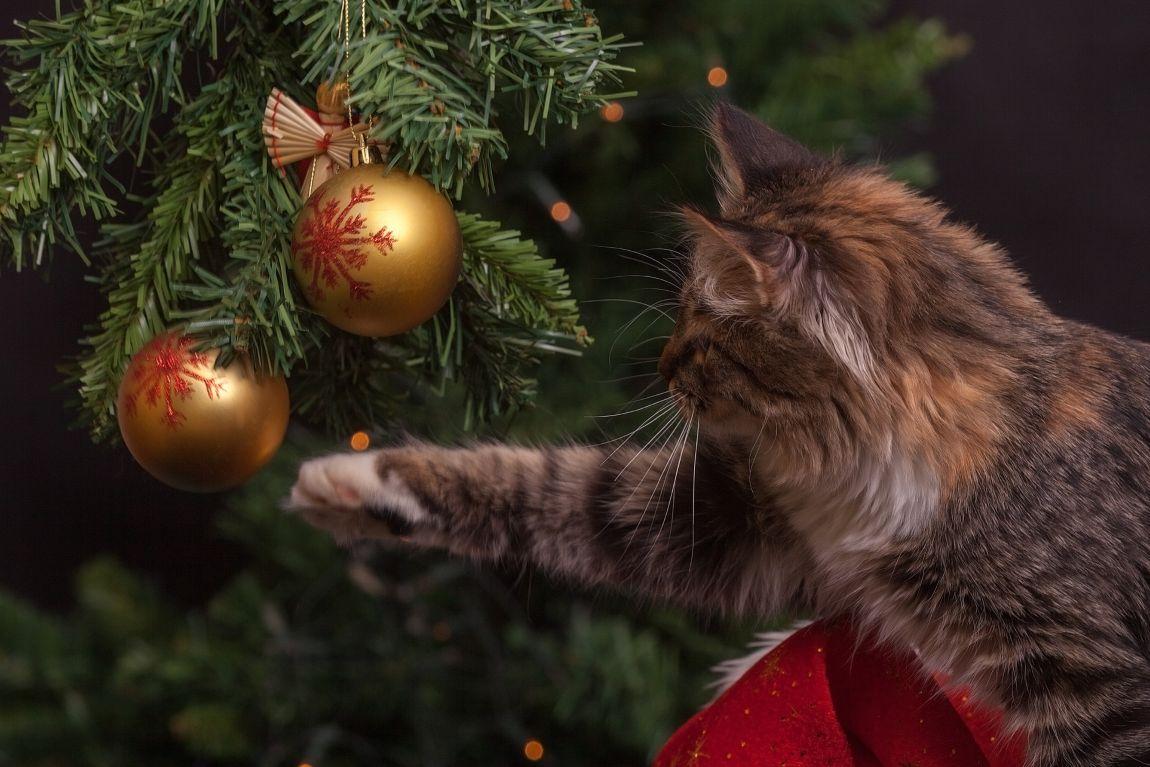 Кот, Новый год, ёлка, игрушки, шар, игра