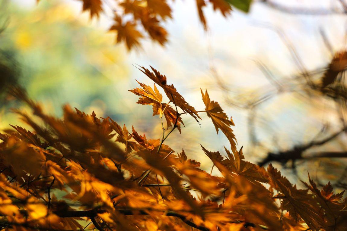 Осень, листья, сентябрь, осенний сезон
