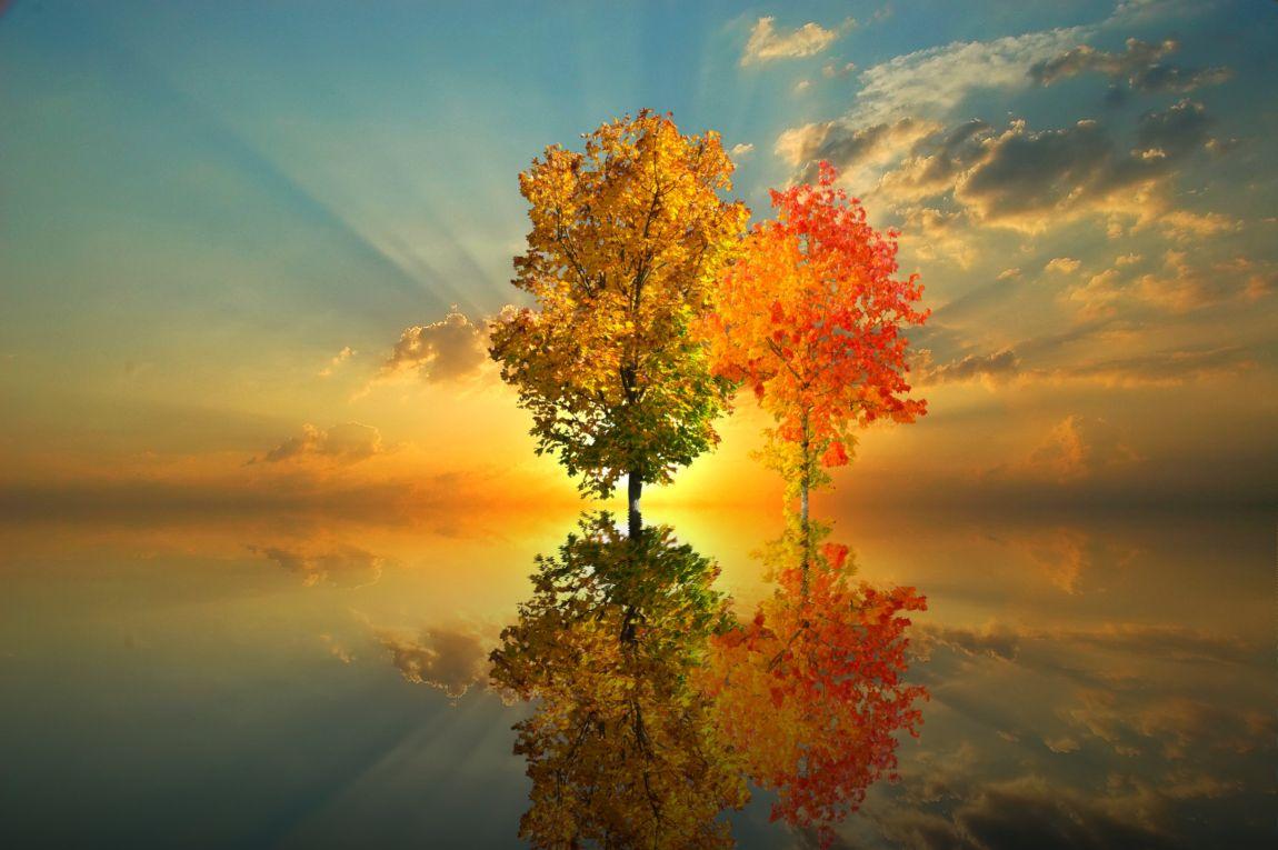 Два дерева, осень, небо, закат