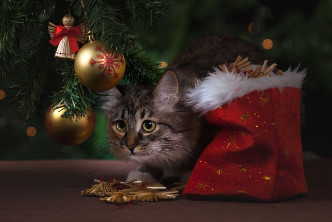 Кот, канун Нового года, ёлка, игрушки, история
