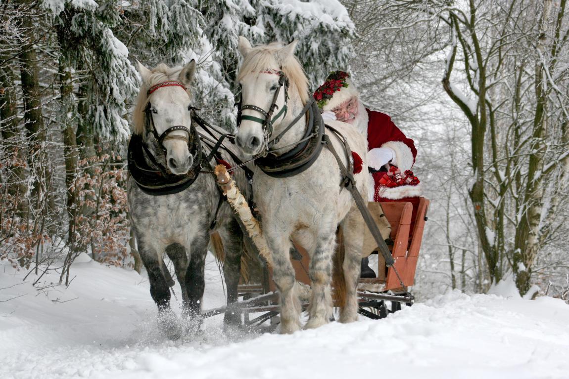 Дед Мороз, сани, зима, декабрь, лес